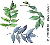 ash leaves in a watercolor...   Shutterstock . vector #1029725314