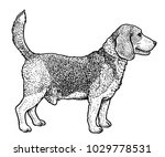 beagle illustration  drawing ... | Shutterstock .eps vector #1029778531