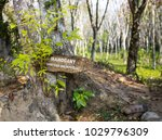 tropical forest with plate with ...   Shutterstock . vector #1029796309