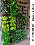 a vertical herb garden in a... | Shutterstock . vector #1029811501