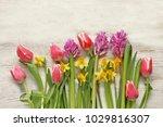 Daffodils  Hyacinth  Tulips On...