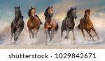 Stock photo horse herd run fast in desert dust against dramatic sunset sky 1029842671