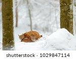 mother with young  wild cat... | Shutterstock . vector #1029847114