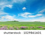 green spring wheat field and...   Shutterstock . vector #1029861601