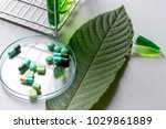 science research leaves of... | Shutterstock . vector #1029861889