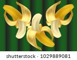 bananas with realistic pulp and ... | Shutterstock .eps vector #1029889081