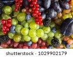 ripe blackberries  blackberries ... | Shutterstock . vector #1029902179