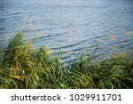 nature  background with coastal ... | Shutterstock . vector #1029911701