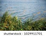 Nature  Background With Coasta...