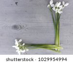 snowdrop flowers frame on... | Shutterstock . vector #1029954994