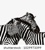 zebra couple vector drawing... | Shutterstock .eps vector #1029973399