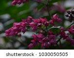 bleeding heart flower | Shutterstock . vector #1030050505