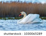 beautiful white bird on spring... | Shutterstock . vector #1030065289