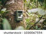 Small photo of Camera trap or trail camera in rhododendron thicket in Sikhote Alin Nature Reserve, Far East Russia