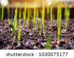 young spring shoots of greenery ... | Shutterstock . vector #1030075177