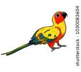 the sun parakeet parrot brazil  ... | Shutterstock .eps vector #1030083604