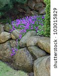 Aubrietta Cultorum Flowers On...