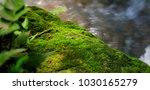 Fresh Green Moss Rock Texture...