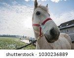 White Horse Looking Sideways...