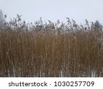 winter bent nature | Shutterstock . vector #1030257709