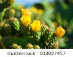 Yellow Flowers On A Green Cactus