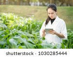Small photo of Biotechnology woman engineer examining plant leaf for disease, science and research concept