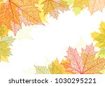 autumn background and leaves of ... | Shutterstock .eps vector #1030295221