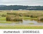 portmeirion village on the...   Shutterstock . vector #1030301611