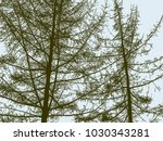 silhouettes of the spruce trees ... | Shutterstock .eps vector #1030343281