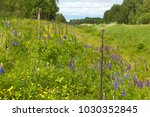 flowers lupine and buttercups... | Shutterstock . vector #1030352845