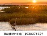 great blue heron  ardea...   Shutterstock . vector #1030376929
