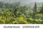 tropical vegetation in the rain ... | Shutterstock . vector #1030426105