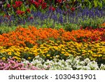 flower garden  nature | Shutterstock . vector #1030431901