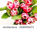 a bouquet of blooming tulips. | Shutterstock . vector #1030456471