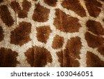 Fur Of Giraffe Useful For...