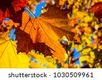 autumn colorful leaves  | Shutterstock . vector #1030509961