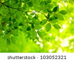 green leaves background   Shutterstock . vector #103052321