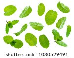 fly fresh raw mint leaves... | Shutterstock . vector #1030529491