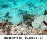 sealife of mystery island ... | Shutterstock . vector #1030538434