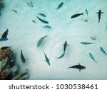 sealife of mystery island ... | Shutterstock . vector #1030538461