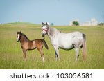 Mother horse and her little foal - stock photo