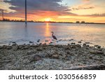 tall great blue heron ardea...   Shutterstock . vector #1030566859