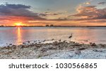 tall great blue heron ardea...   Shutterstock . vector #1030566865