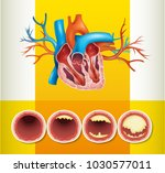 heart anatomy and fat in vein... | Shutterstock .eps vector #1030577011