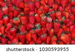 Fresh Strawberry Harvest...