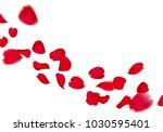 red sakura or rose falling... | Shutterstock .eps vector #1030595401