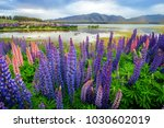 lake tekapo lupin field in new... | Shutterstock . vector #1030602019