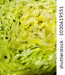close up of head of lettuce | Shutterstock . vector #1030619551