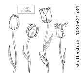 set of tulip flowers hand drawn ... | Shutterstock .eps vector #1030621534