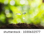 plant a tree natural tree green ... | Shutterstock . vector #1030632577